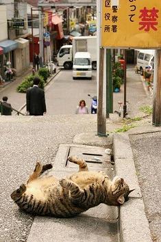 猫画像2014 その2