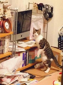 猫画像2014 その1