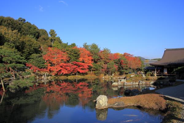 14.11嵐山6D (109)