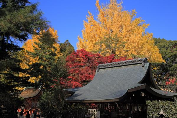 14.11嵐山6D (154)