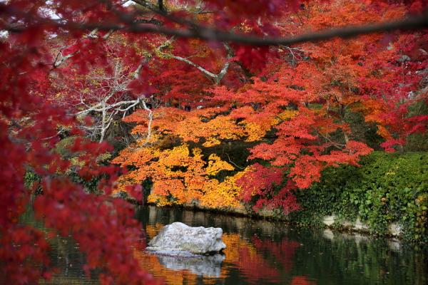 14.11嵐山6D (188)
