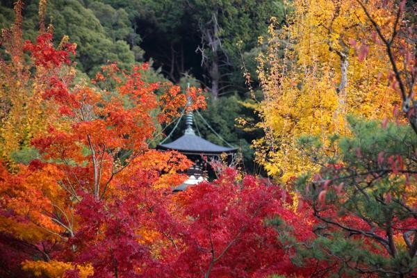 14.11嵐山6D (196)
