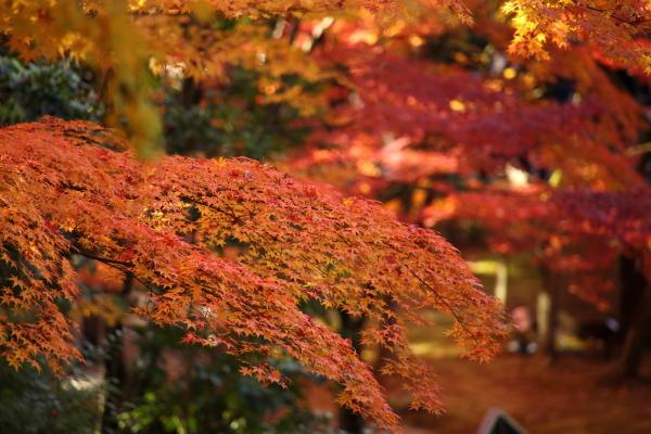 14.11嵐山6D (180)