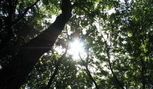森の木漏れ日が好き